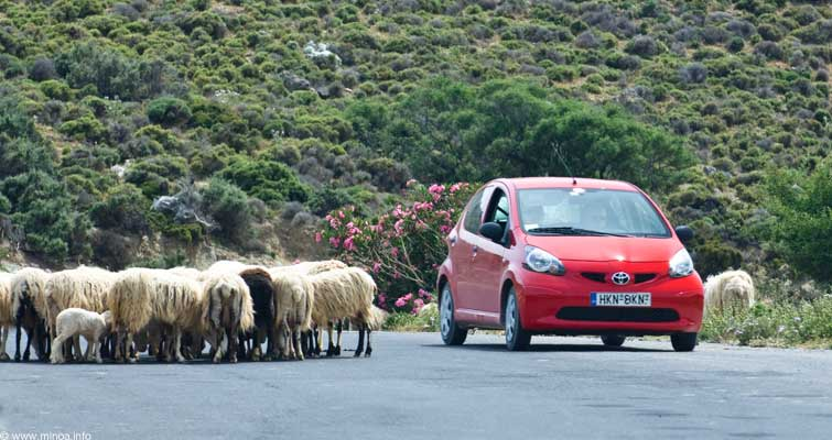 Road with sheep in Crete